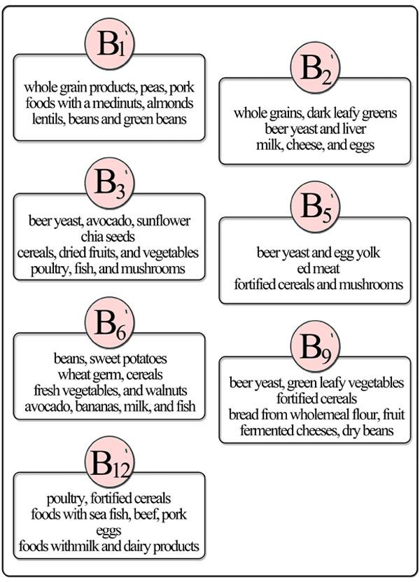 The importance of vitamins B in pregnancy.