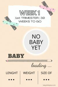Baby's Development: 1st Week of Pregnancy